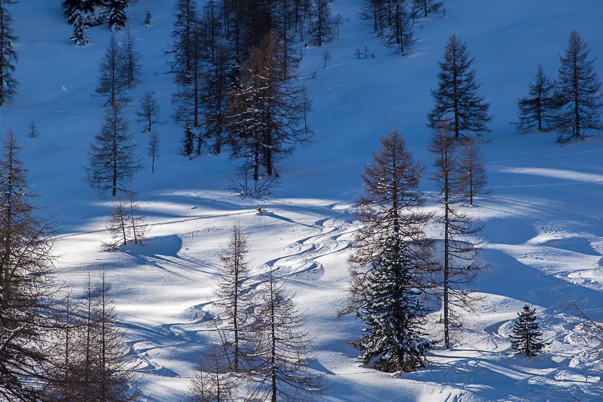 Schönes, licht bewaldetes Almgelände im Aufstieg zum Gaishorn.
