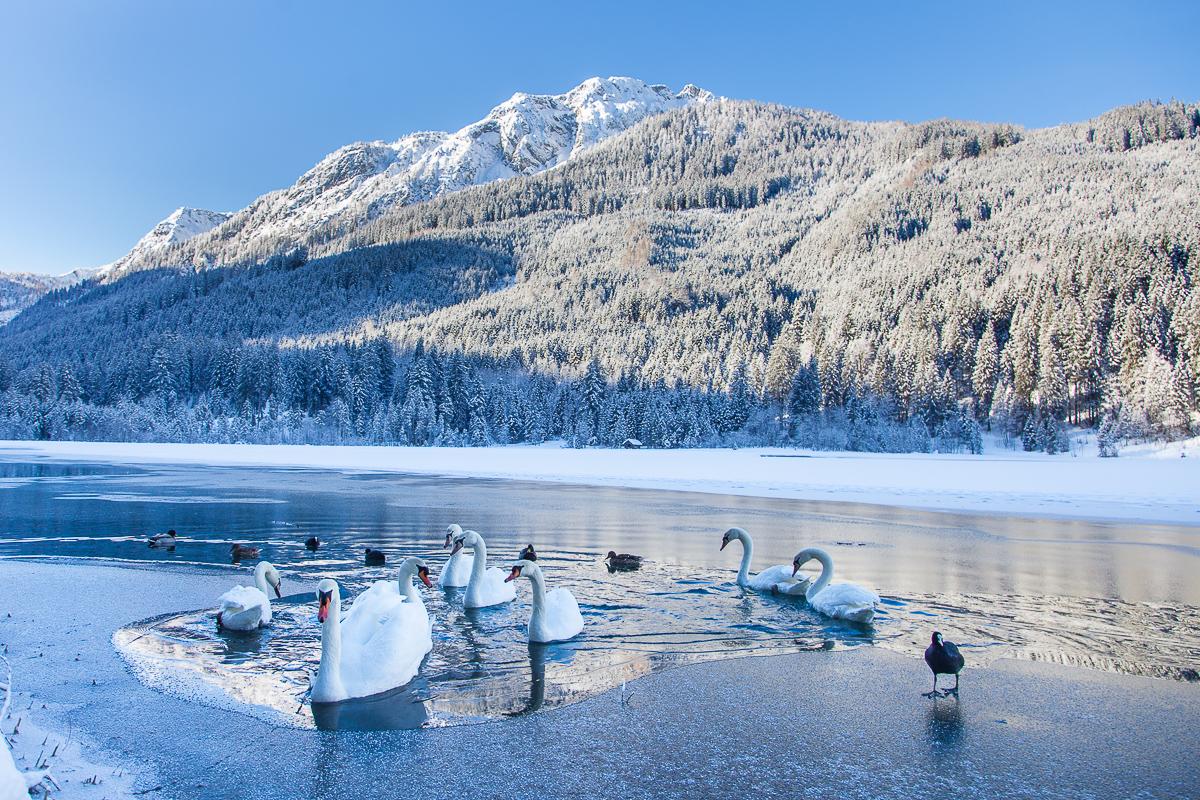 Die Eisbrecher vom Jägersee