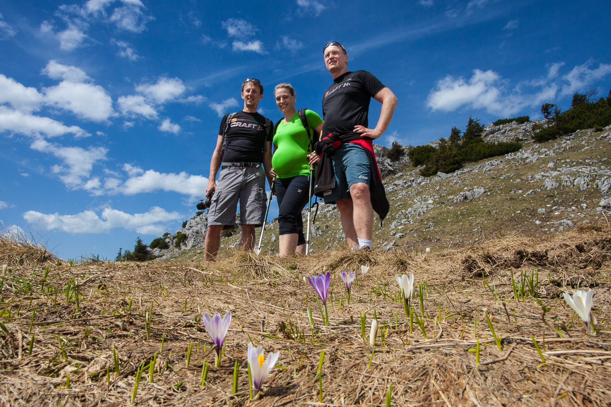 Krokusblüte am Gipfelplateau des Breitenstein
